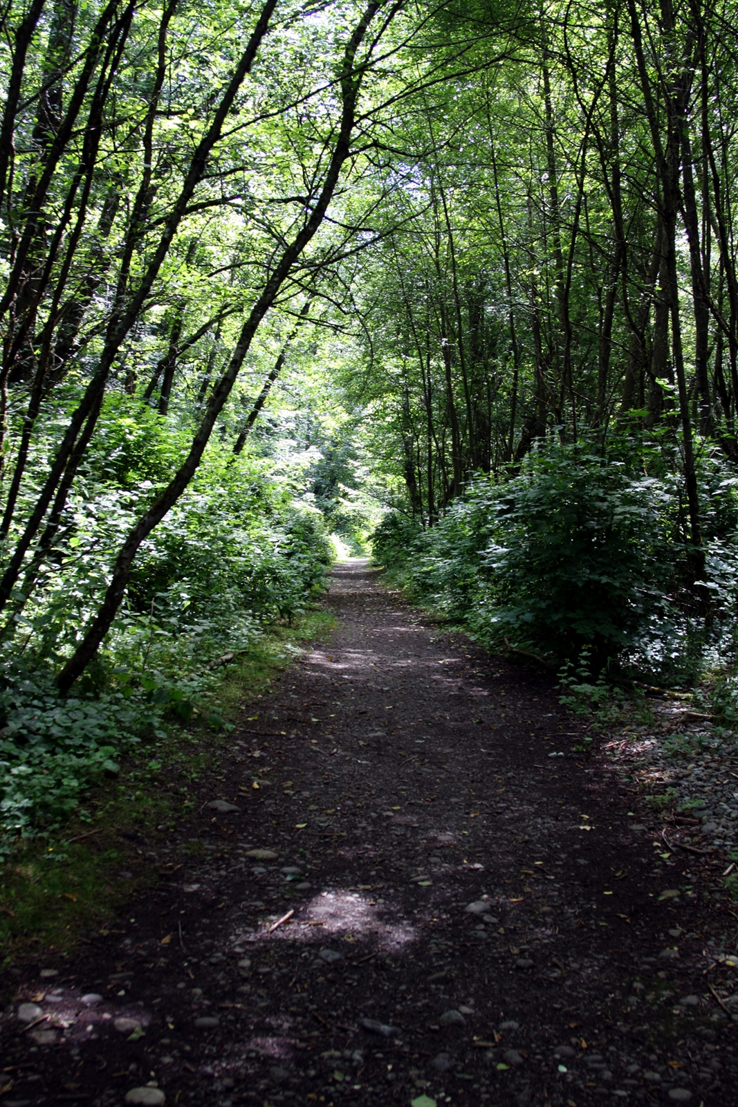 Swan Creek is a quiet getaway for anyone wanting a little piece of nature in the city.