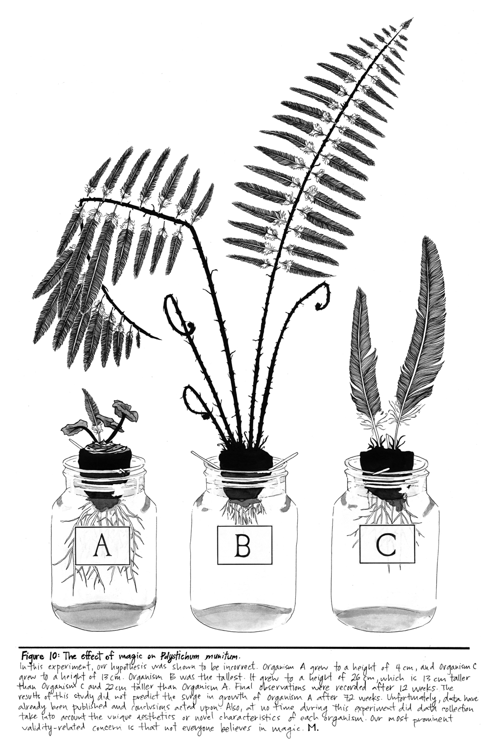 Figure 10 of the Street Botany Prints by Maria Jost