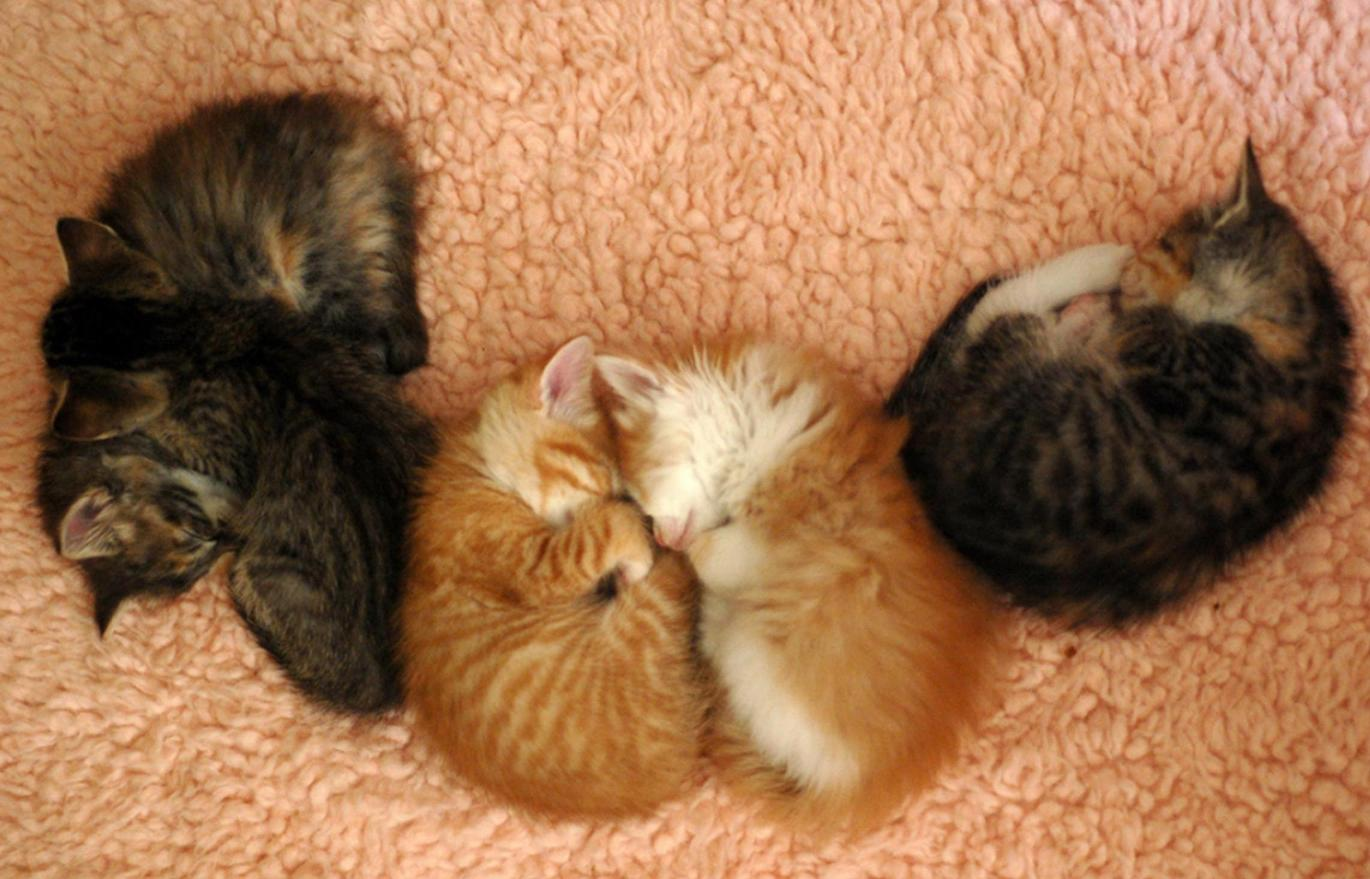 The Darling family napping. Photo by Laurie Cinotto