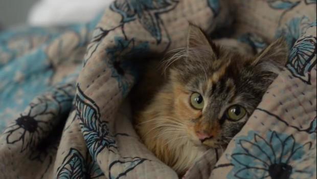 L Cinotto kitty 1