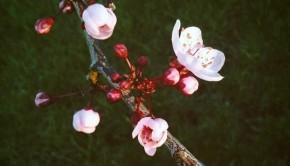 tacoma spring 1