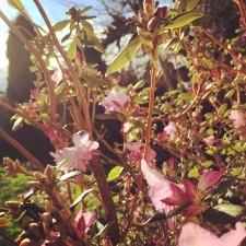 tacoma spring 6
