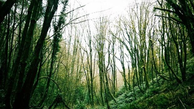 Puget Creek Gulch KE
